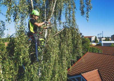 Arboristi kattojen yllä