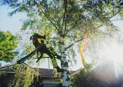 Puun hoitoa kiipeilemällä